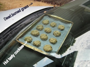 Dashboard cookies and dead grass